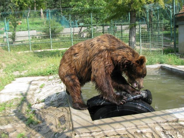 Aproape 10.000 de vizitatori la Zoo Sibiu in weekend-ul prelungit!