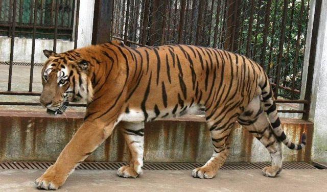 Aproape 10.000 de vizitatori la Zoo Sibiu in weekend-ul prelungit!2
