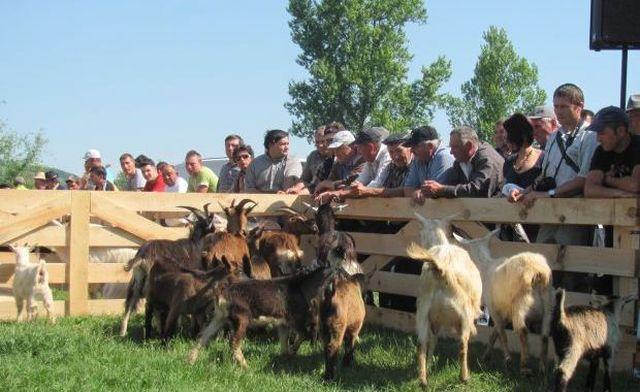 """Editia I a festivalului ,,Produse traditionale de capra din zona Tarnavelor"""" in comuna Tarnava!"""