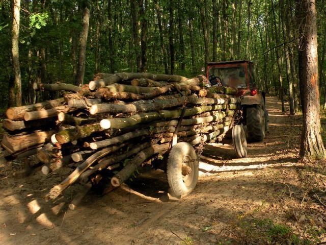 GATA cu TAIERILE ILEGALE din paduri! Va fi implementat SISTEMUL DE URMARIRE a lemnului! Sibiul, primul beneficiar al proiectului!