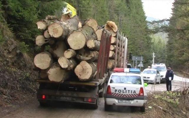 GATA cu TAIERILE ILEGALE din paduri! Va fi implementat SISTEMUL DE URMARIRE a lemnului! Sibiul, primul beneficiar al proiectului!2