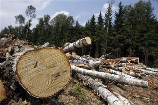Cat lemn se fura din padurile Sibiului? Peste 40 de furturi zilnic