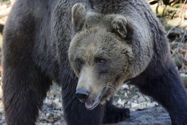 Un barbat muscat de urs a fost adus la Unitatea de Primiri Urgente Sibiu!2
