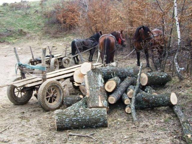 Cercetati pentru taierea ilegala de arbori!