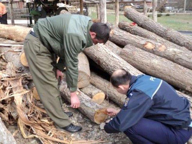 Cercetati pentru taierea ilegala de arbori!2