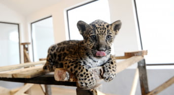 Grădina Zoologică are oficial şi terasă asigurată