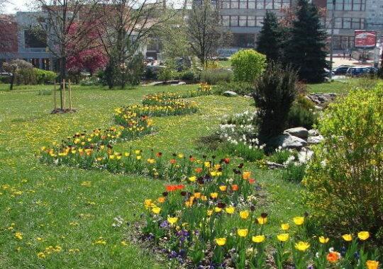 Primaria vrea Sibiul verde si plin de flori