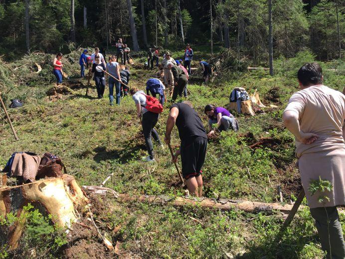 Politicienii defriseaza, studentii reimpaduresc. 1000 de molizi plantati de studentii ULBS