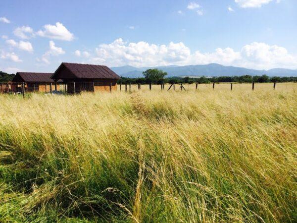 teren selimbar
