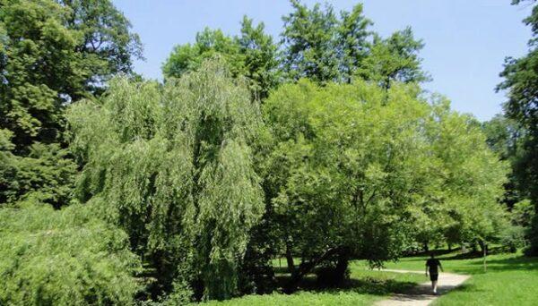 sibiu, spatii verzi, arbori , primavara