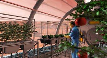Asta ne mai lipsea! Vom manca legume cultivate pe Marte!