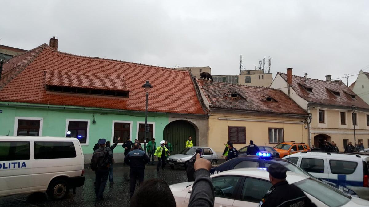 In strada pentru ursul impuscat. O asociatie din Bucuresti organizeaza un protest la Sibiu