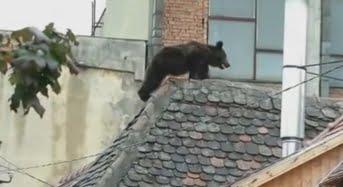 """O asociatie face ce n-a facut niciun guvern. Propune un protocol pentru a evita un nou caz """"ursul de la Sibiu"""""""